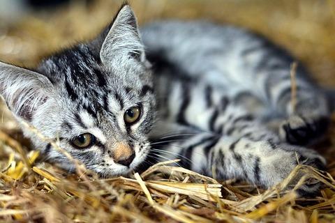 cat-3535266_640