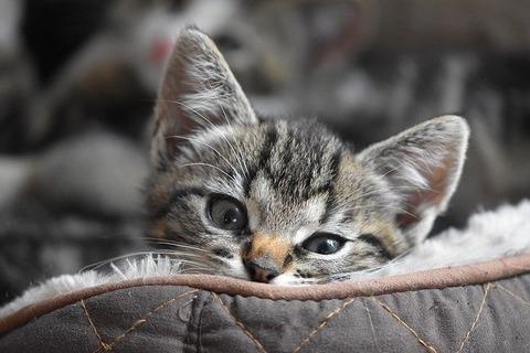 cat-4320330_640