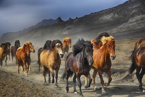 horses-2360048_640