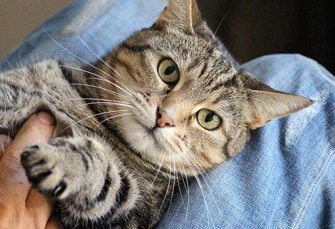 cat-1375793_640