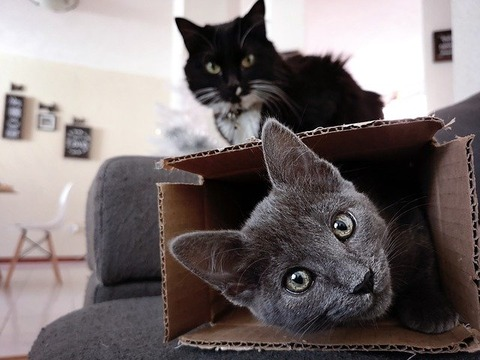 cats-3971069_640