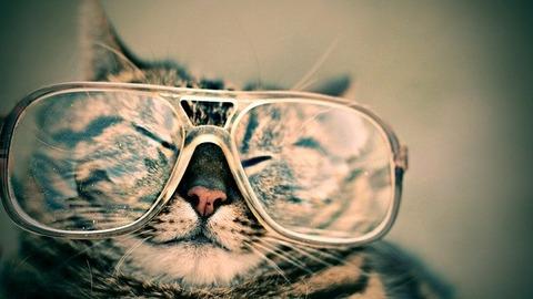 cat-g3c25416d0_640