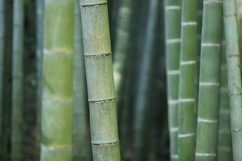 bamboo-919052_640
