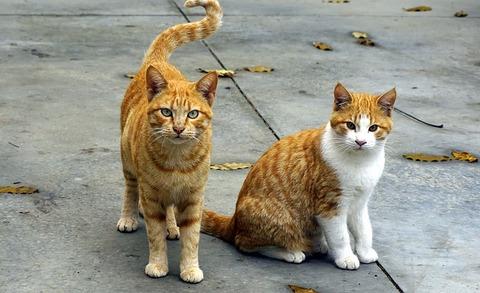 cats-1800942_640