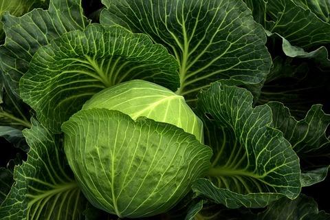 cabbage-3722498_640