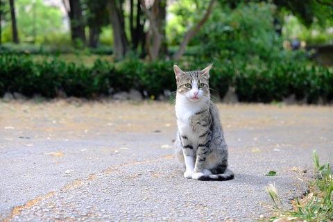 cat-5434614_640