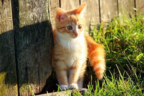 cat-1083000_640