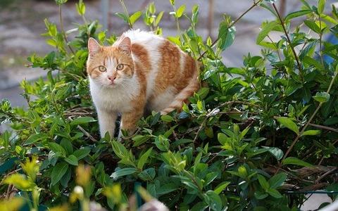 cat-5014414_640