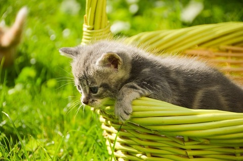 kitten-3831304_640