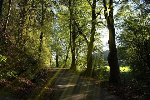 forest-path-2754190_640