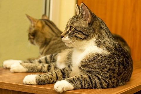 cat-5039084_640