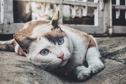 cat-1209067_640