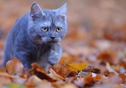 young-cat-665133_640