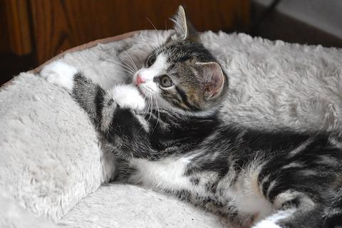 cat-4289259_640