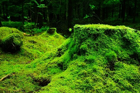 forest-483206_640