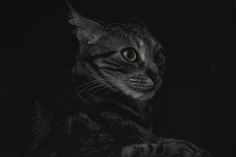 animal-1836422_640