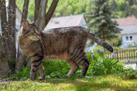 cat-3444355_640