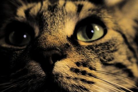 cat-2194707_640