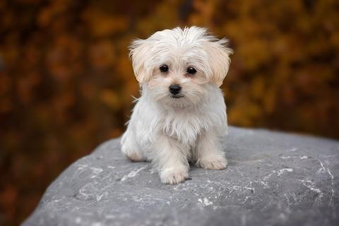 dog-1037702_640