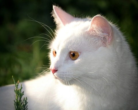 cat-4527393_640