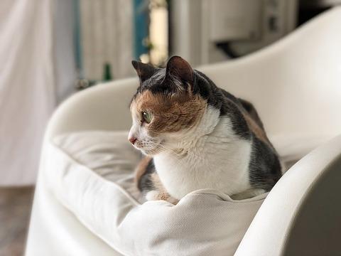 cat-3536503_640
