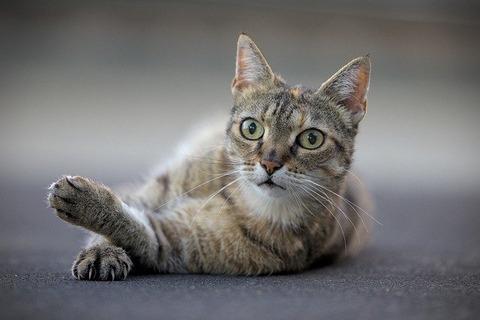 cat-6330804_640
