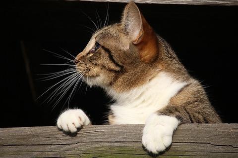 cat-1184981_640