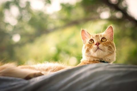 cat-3611282_640