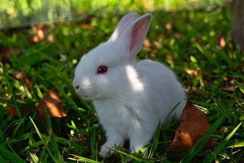rabbit-3273992_640