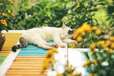 cat-6569156_640