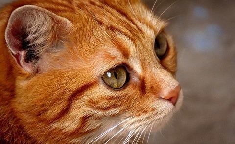 cat-3080965_640