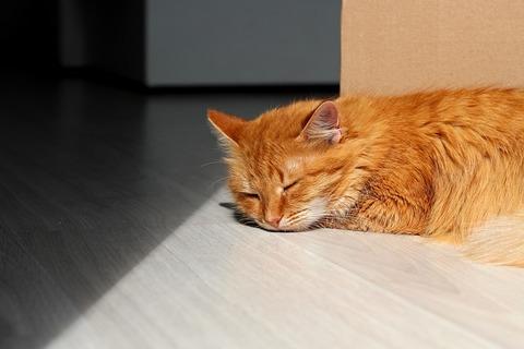 cat-4353616_640