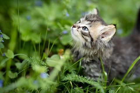 kitten-3669244_640