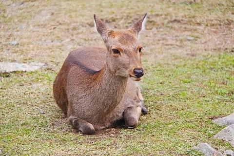 deer-3118522_640