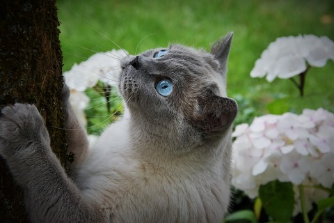 cat-3526651_640