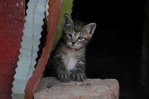 cat-4281473_640