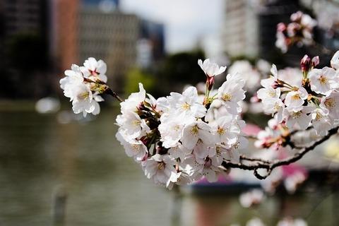 flower-3269389_640