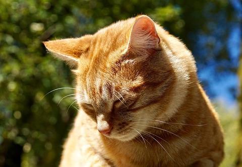 cat-2838799_640