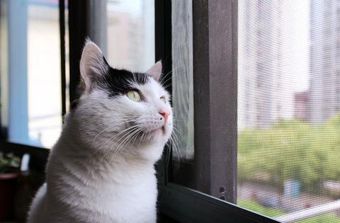 cat-4216465_640