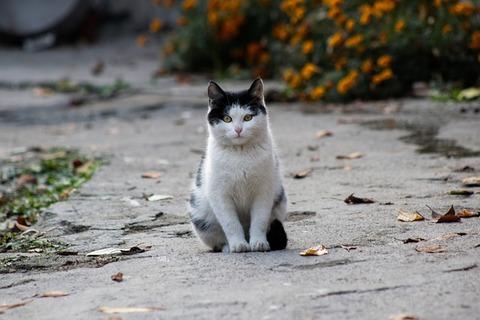 cat-2942689_640
