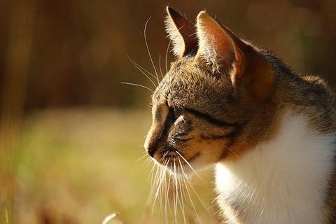 cat-2213739_640
