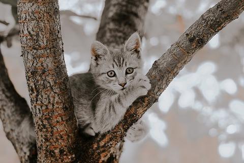 cat-3482470_640