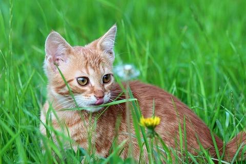 cat-1700488_640