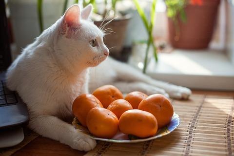 cat-4140870_640