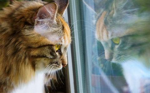 cat-5896341_640