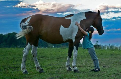 horse-2536537_640