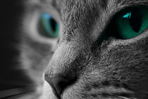 cat-1535160_640