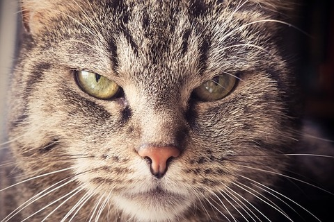 cat-1937001_640