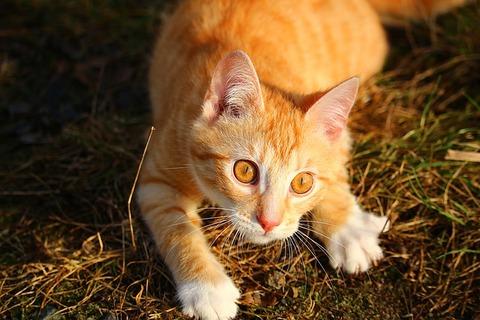 cat-1184747_640