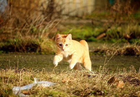 cat-1166188_640